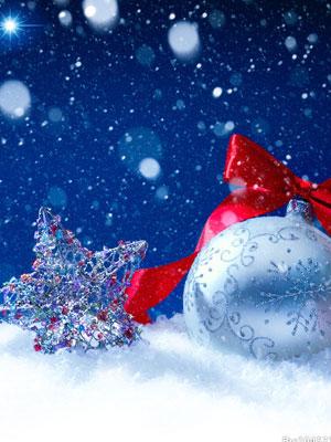 你和谁在圣诞节?